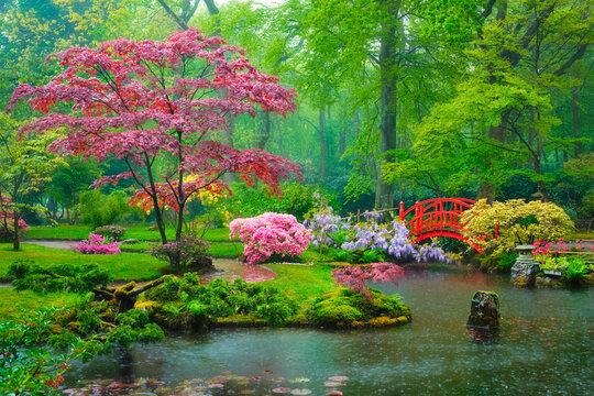 Small bridge in Japanese garden in rain, Park Clingendael, The Hague, Netherlands