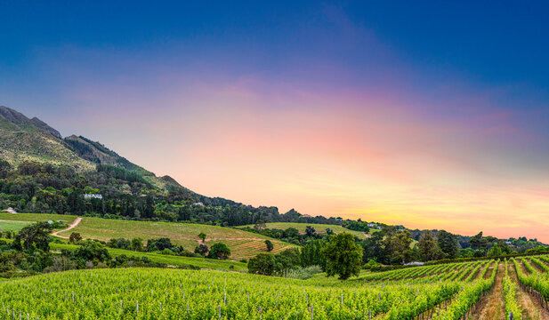 Constantia wine valley a view from constantia glen wine estate cape town South Africa