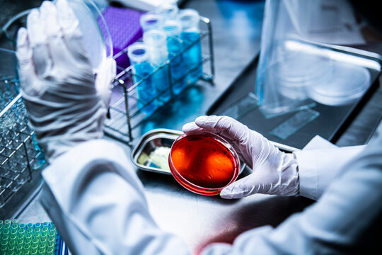 赤い色の細菌が入ったシャーレを手に取る女性研究者