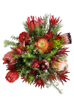 Bouquet of Protea Flowers with white background