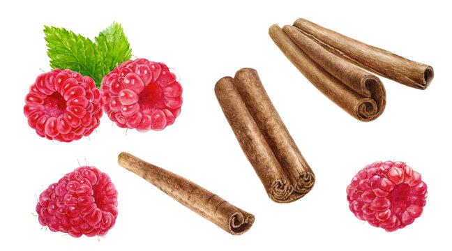 Cinnamon sticks raspberry watercolor illustration isolated on white background