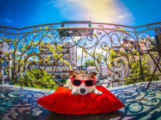 dog sunbathing on balcony