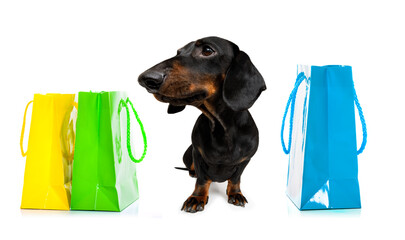 Foto op Plexiglas Crazy dog sale shopping dog