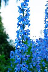 Nice Blue Flower