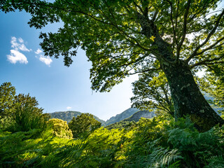 mount Accellica with oak in the foreground. Picentini Natural Park, Giffoni Valle Piana, Campania, Salerno, Italy