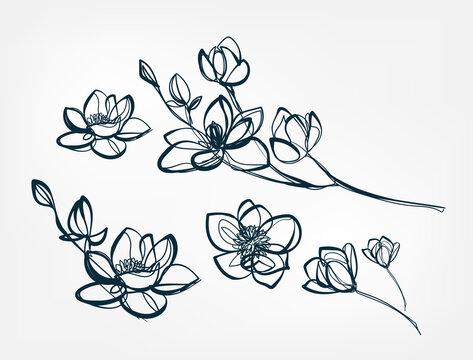 flower magnolia line one art isolated vector illustration