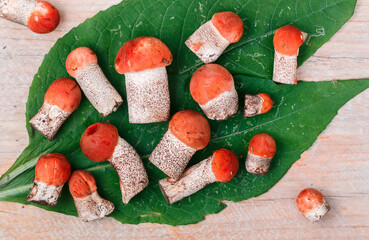 Forest edible mushrooms. Freshly picked aspen mushroom on a  wooden background. Selective focus, top view