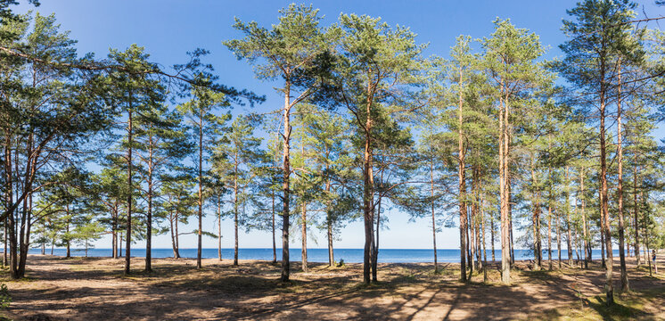 Coolness in the forest in the summer heat near Baltic Sea