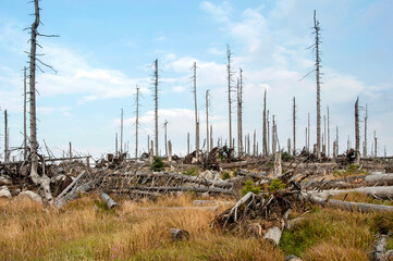 Dead trees in the Bavarian Forest National Park