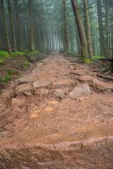gliniasta ścieżka po obfitym deszczu