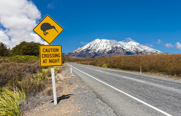 Kiwi and mount Ruapehu in New Zealand