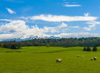 Mt. Ruapehu and fields in New Zealand