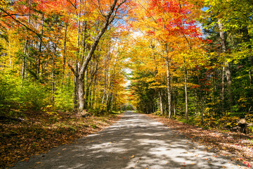 Unpaved back road through a deciduous forest on a sunny autumn morning. Stunning fall fogliage. Groton State Forest, VT, USA.