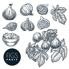 Ripe figs on branch, in dried figs in bowl sketch vector hand drawn illustration. Sweet fruits harvest.
