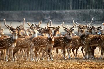 deer in the zoo.