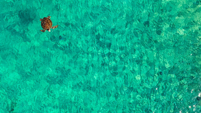Aerial view: Green Sea Turtle swim in shallow water of coral reef in Caribbean Sea - Curacao
