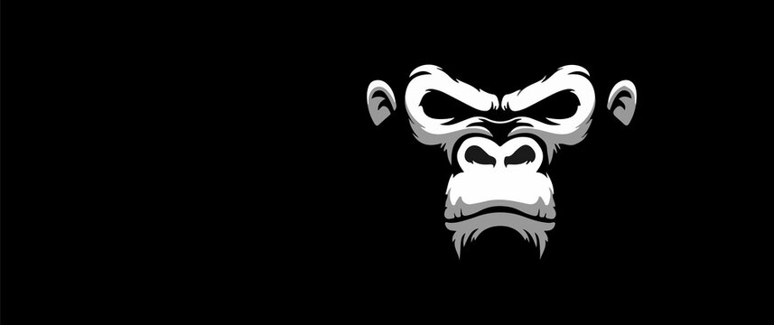 angry monkey white illustration with black background gorilla vector