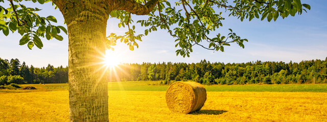 Landscape banner wide panoramic panorama background - Hay bales / straw bales on a field and blue sky with bright sun and apple tree in the summer in Germany