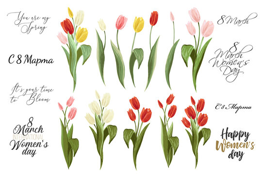 International women day text in russian, 8 march lettering, and colorful tulip bouquet. Spring floral elements. Set of blossom vector flowers. Simple digital watercolor illustration. Vintage graphic