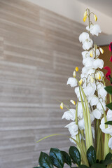 Door stickers Orchid orchidee per arredamento
