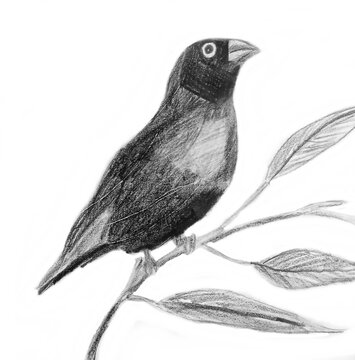 Bird Pencil Drawing Picture