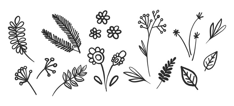 Tiny flowers, little leaf, Christmas tree twig, rustic motif leaves, brunch, linden ethnic plant. Black doodle on white background. Textile design texture. Vector line sketch elements.