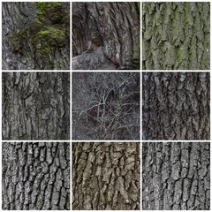 Tree bark texture set. Tree trunks with natural bark patterns on the surface. Collection of wood backgrounds.