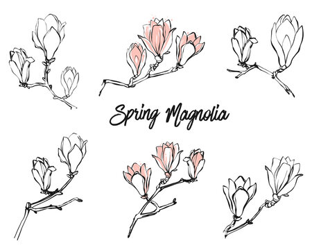 Black line and pink magnolia flowers and text set on white background. Vintage style on white background. Hand drawing watercolor pattern. Vector line art illustration