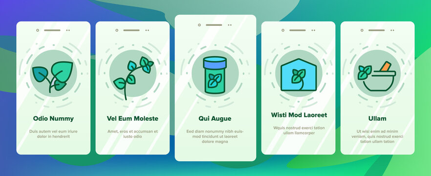 Oregano Herbal Plant Onboarding Mobile App Page Screen Vector. Oregano Spice Branch In Greenhouse And Garden, In Pot And Bottle, Spice On Pizza And Soup Illustrations