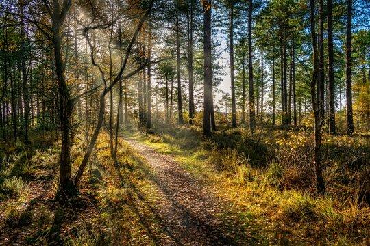 Woodland path with sun rays