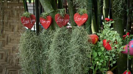 Sichuan pepper in the  red love pot