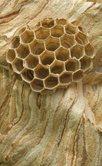 Hornet Nest Hive Background
