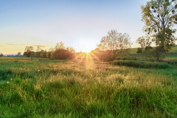 An idyllic evening landscape on a meadow field