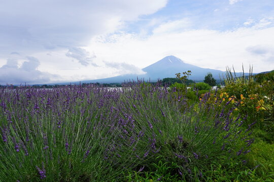 富士山とラベンダー畑