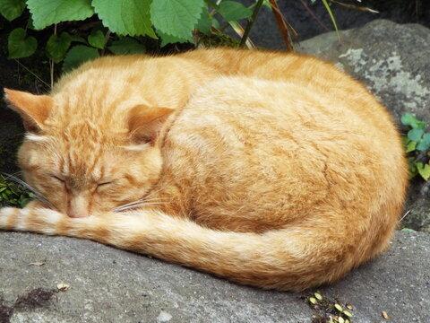 猫 cat