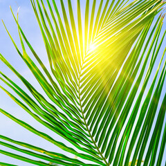 Sun over green palm leaves.
