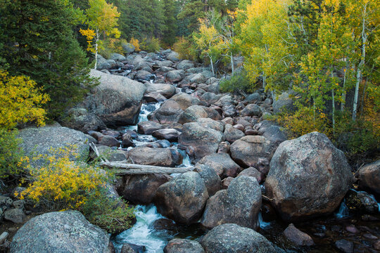 Boulder Creek with aspen trees turing color in the autumn season in Rocky Mountain National Park, Colorado