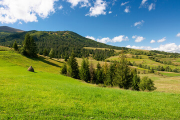 rural fields on a sunny autumn day. trees on the grassy hills. beautiful countryside scenery of carpathian mountains. fluffy clouds on the blue sky