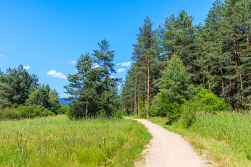 Cycling trail In Czerwony Bor Nature Reserve near Nowy Targ town on sunny summer day, Tatra Mountains, Poland