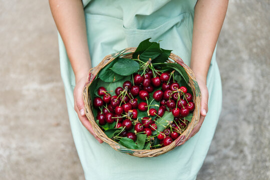 Young woman hold a basket with cheries.