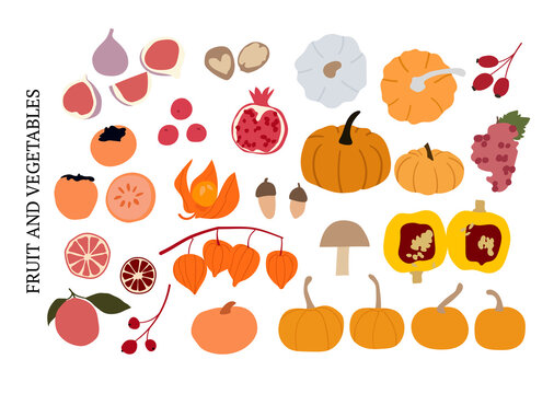 Abstract autumn fruit and vegetable set, fall elements collection vector. Pumpkin, figs, physalis, persimmon, grape, berries, orange, rose hip