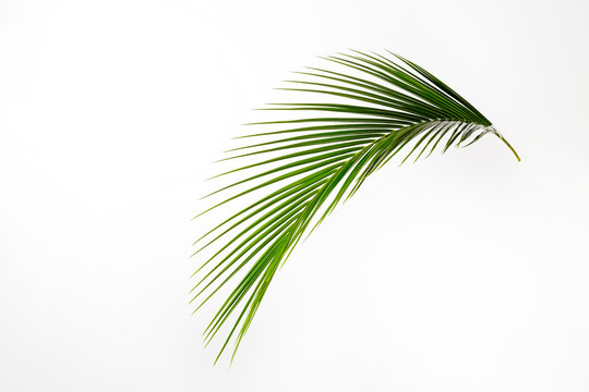 Big green palm leaf over bright background. Freshness concept.