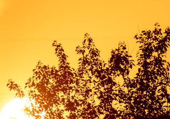 Trees in summer in the sunset light.