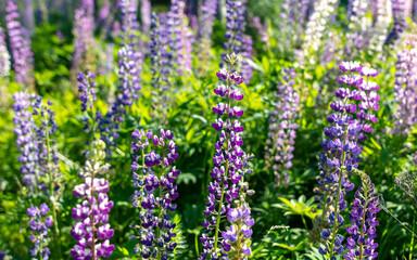 Beautiful purple flower grows in the park.