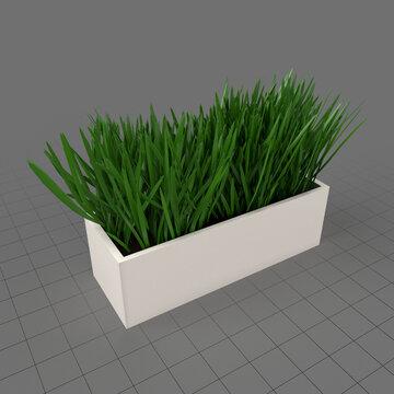 Grass in pot 1