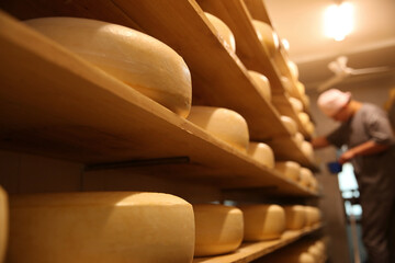 Fresh cheese heads in factory warehouse and blurred worker on background