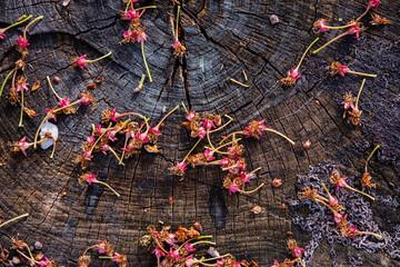 Fallen dry cherry flowers lie on a tree stump in the garden.