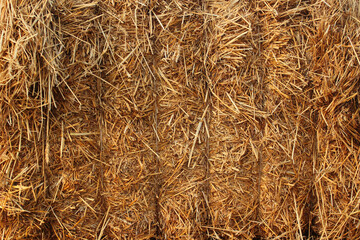 Bale of hay, closeup texture. Straw and stubbles on a harvested wheat field