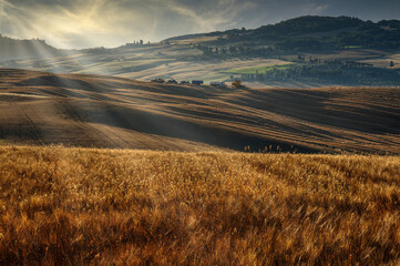 Tuscany landscape in summer