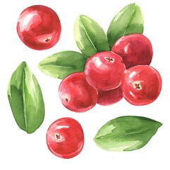 Hand drawn watercolor cranberry with green leaves isolated on white background. Food illustration.